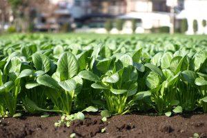 「2022年生産緑地法問題」とは?本当に不動産価格は暴落するのか!?